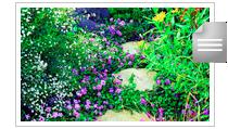 media-flower-bees