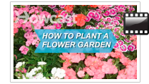 media-flower-howtoplant